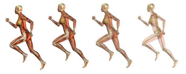 Os ossos e os músculos atuam juntos, garantindo nossa locomoção.