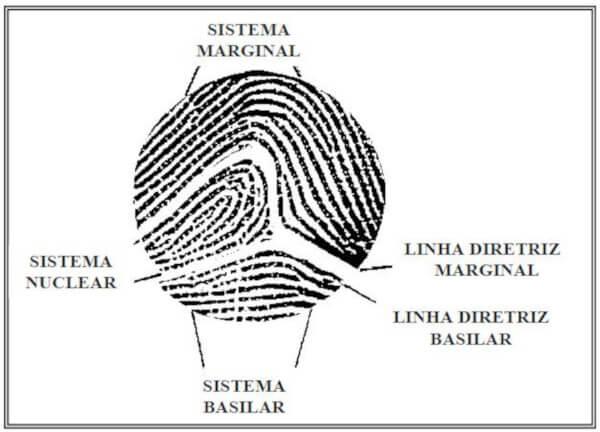 Linhas diretrizes e Sistema de linhas