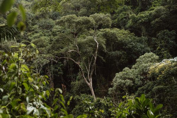 A Mata Atlântica é constituída por formações florestais e alguns ecossistemas associados.
