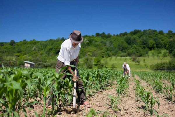 Minifúndio são pequenas propriedades rurais destinadas à subsistência de uma família.