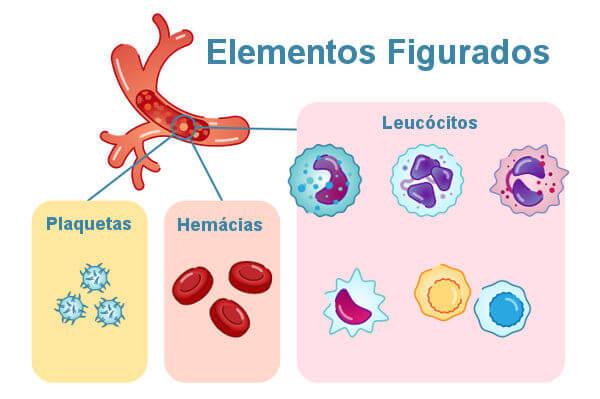 Os elementos figurados são as hemácias, os leucócitos e as plaquetas.