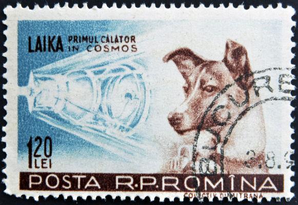 A cadela Laika foi o primeiro ser vivo a ser enviado ao espaço durante a missão do Sputnik 2.