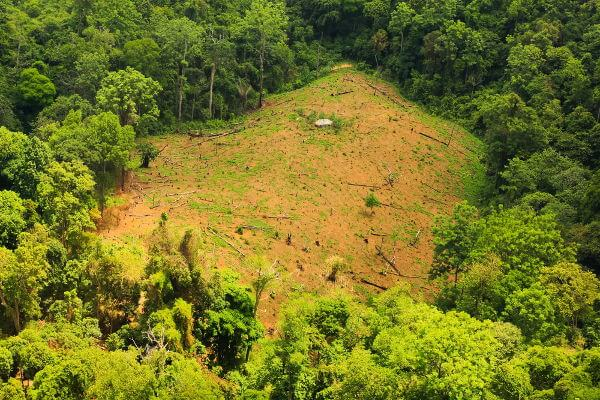 A sucessão secundária leva à recuperação de áreas desmatadas.