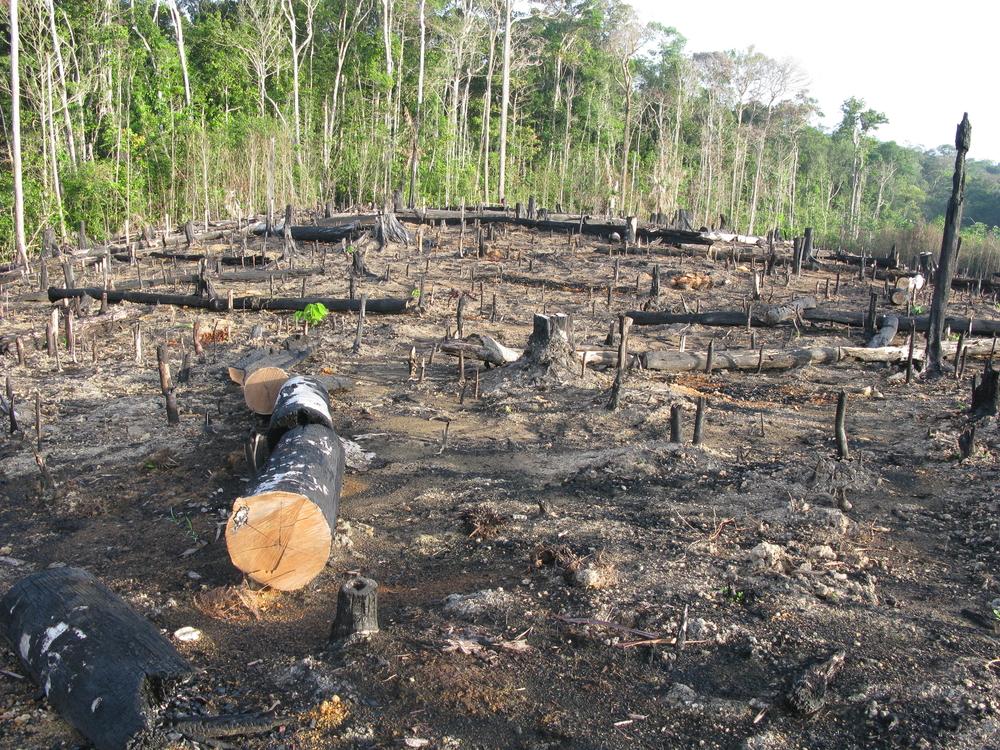 O aumento do desmatamento na Amazônia alcançou proporções alarmantes.