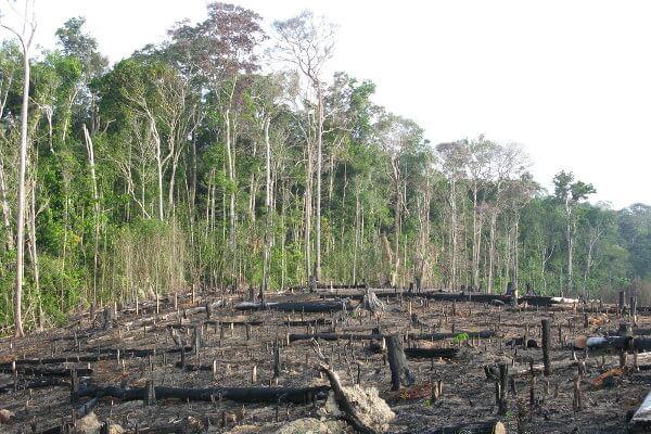 O desmatamento na Amazônia afeta diretamente o equilíbrio do nosso planeta.