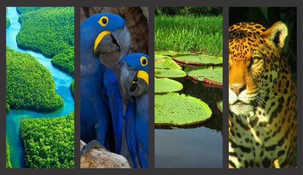 Fauna, flora e águas, são fontes de Vida do Meio Ambiente